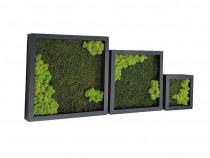 Set 3 tablouri pătrate negre în scară cu mușchi și licheni