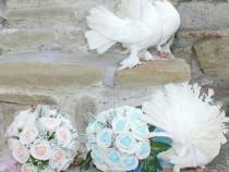 Porumbei, Stalpisori, Covor Rosu Pentru Nunta
