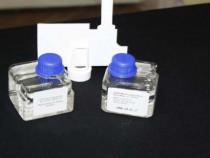 Odorizant parfum cws bluewave - ocean auto / camera -100% o