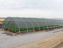 Plasa Protectie Plante - livrare in toata tara