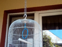 Colivie papagali, pasari, canari