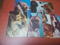 Cărți postale câini de rasa