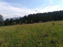 Un hectar teren constructie 10000mp Campulung Mold