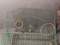 Cuşcă pentru păsări