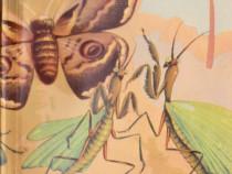 Obiceiurile insectelor