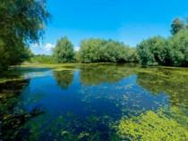 ID INTERN:7172 Dunavatul de Jos - Teren Intravilan