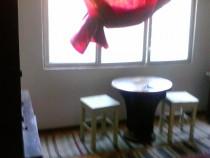 Garsoniera Aleea Trandafirilor in Orasul Abrud,jud.Alba