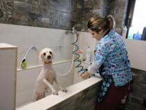 Curs de Frizerie Canina Piatra Neamt