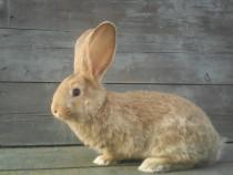Schimb iepuri cu baloti lucerna sau cereale
