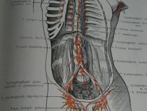 Carte de Anatomie, în lb. Germană, de Prof. Dr. H.K. Corning