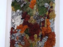 Tablou licheni naturali 'Fluturi' 25 x 35 cm