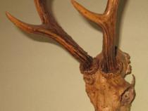 Cap căprior (craniu cu coarne)