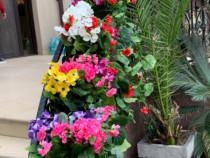 Arti Flor