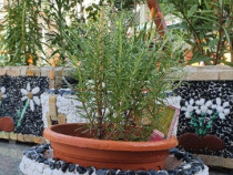 Jardiniera ovala lucrata manual cu marmura din Thassos