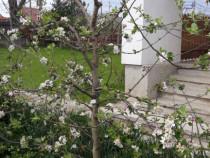 Executăm lucrări de tuns pomi fructiferi și vița de vie