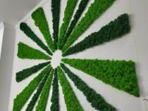 Licheni naturali stabilizați calitatea 1