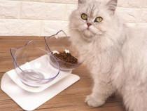 Boluri ortopedice pentru pisici