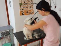 Curs de frizerie canina Iasi