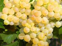 Strguri de vin toate soiuriile , Transport in toata tara