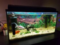 Acvariu Eheim 54 litri pești accesorii