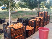 Tăieri pomi fructiferi , viță de vie , tocam crengi