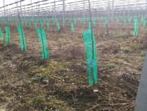 Plasa protectie/ventilare pomi fructiferi/vita de vie 100m