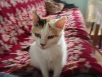 Ofer pisicuta spre adoptie