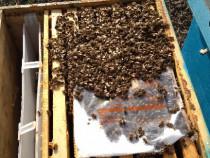 Familii de albine sau schimb cu diverse auto 4x4