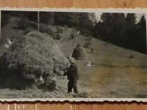 Fotografie munci agricole 1967