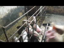 Animale domestice de la ferma!
