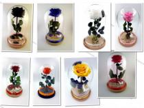 Trandafir Criogenat Wide Flowers 9cm in cupola sticla 27cm