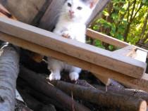 Buna, sunt o pisicuta mica si imi caut stapan!