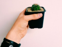 Cactusi si Succulente