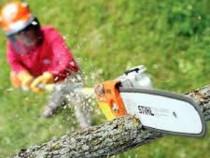 De inchiriat ferastrau pentru toaletat copaci