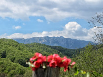 Teren intravilan 600 mp Olanesti-Gurguiata Valcea