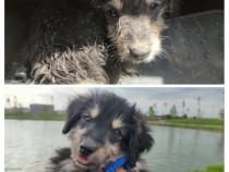 Catel metis 4 luni adoptie