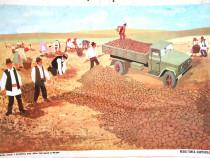 Afis didactic vechi comunist - Recoltarea Cartofilor