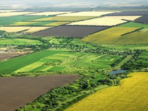 Afacere la cheie societate agricola
