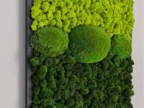 Tablou licheni si muschi 50x40 cm