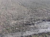1771mp teren arabil Bascov Lunca