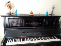 Pianina, cu multe vise