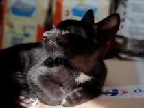 Pui pisica neagra