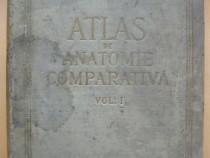 Ghetie - Atlas de anatomie comparativa - volumul I