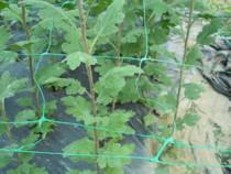 Plasa sustinere plante