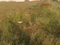 Teren intravilan - loturi de casa teren Ghercesti 500 mp