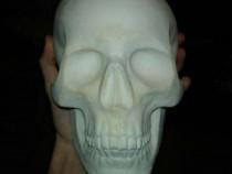 Craniu ipsos