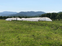 3 solarii agricole