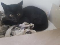 Cinci pisicute pufosele de 2 luni cauta casuta lor