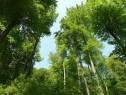 Padure foioase Mehedinti 341 hectare