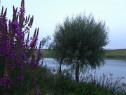 Teren pe malul lacului Mostistea(47 km de Bucuresti) 8714mp